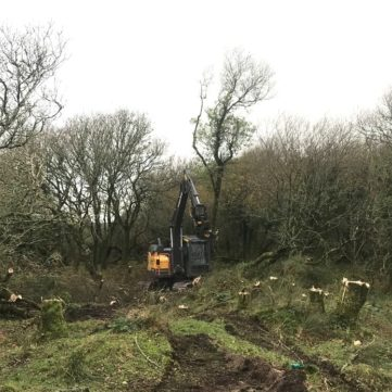 Cornwall Forestry Clearance