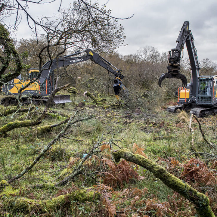 Forestry Clearance Cornwall Wildlife Trust Excavators